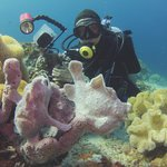 House reef full of friendly frogfish