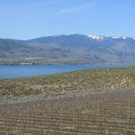  Vineyards and lake , view from the resort