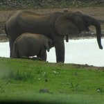 Elephants at Rooikat Dam