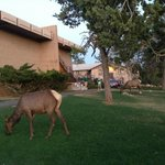  Kachina lodge with Elk