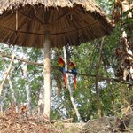 macaws provide noisy entertainment