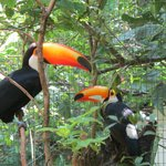 Iguacu Bird Park