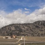  Burrowing Owl Estate Winery amid the spring vineyards near Osoyoos