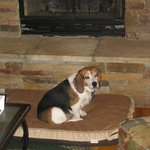 Jellybean Enjoying the Fireplace at Peppermint Patty's