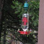  We loved to observe the hummingbirds at the patio feeder.
