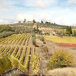 Wine tours of Tuscany