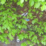 Rubbish in the Bushes