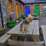  Coco outside the cottages