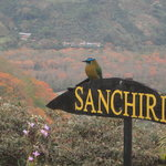  Sanchiri