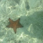 One of the many starfishes seen at Bonefish Point