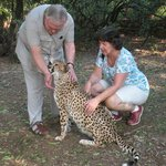  Cheetahs have rough tongues - but they&#39;re friendly souls