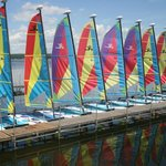  A fleet of Hobie Cat Sailboats