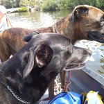 Out on Heron lagoon with the dogs