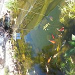  Koi pond in the courtyard!