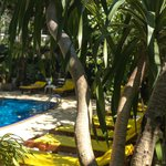 Tropica Pool and trees