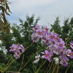  orchidee dans le jardin