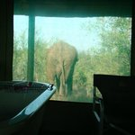  Elephant from the bathroom