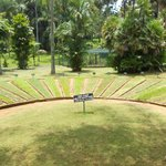 Display of different lawn grasses at Peradeniya