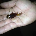 Two cockroaches from our room in security guards hand!
