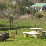 The large Gardens of The Guesthouse with Pricilla Queen of the Little Karoo