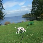  Bran the dog enjoying sun in Connemara (Lough Corrib)