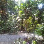  nice jungle around the place