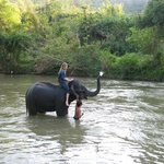  Fun in the water with the elephants