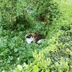 Cat nestled in amongst the gardens