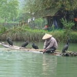  Cormorant fisherman &quot;discreetly&quot; placed whilst on the Bamboo raft experence