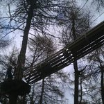 Go Ape at Crathes Castle