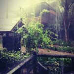 Rainy morning - The rainforest feel!