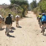 Bicicletas Pedro Martinez - Private Day Tours