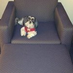 My dog loves Best Western hotels!