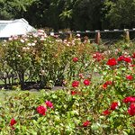  Rose Garden