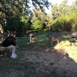  Feeding deer