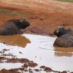 PD tours and safaris - Day Tours