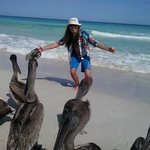  Hanging with the Pelicans