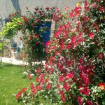 B&amp;B Vento di Rose