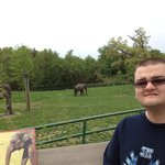  Elephant Enclosure Asian Male Elephant with Nick