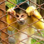  Sqirrel monkey - so sad!