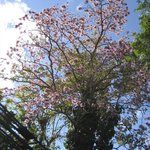  Flowering Tree on the Grounds