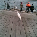 A crane watches the fishermen
