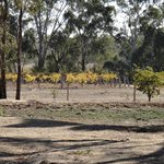 Foto de Byronsvale Vineyard B&B