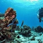 Scandinavian Divers - The world of Diving &amp; Snorkeling