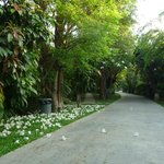  Pathway through bungalows