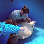  Crew carefully caring for newest Turtle