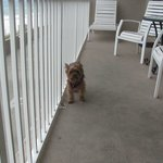 Loved being able to bring our Yorkie.  Balcony was very large.