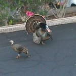  Fun! Extra added surprise, turkeys strutting around the grounds!