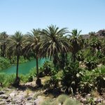  The oasis of Mulege