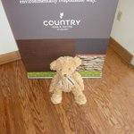 HideAway Haven Teddy visiting from Australia